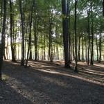 Les na táborem
